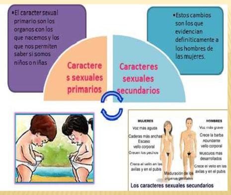 A Que Se Denomina Caracteres Sexuales Primarios Caracteres Sexuales Secundarios