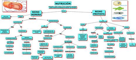 NUTRICION EN MONERA Y PROTISTA
