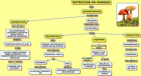 NUTRICIÓN EN REINO HONGO