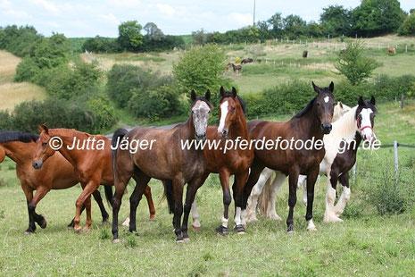 Foto: Jutta Jäger, www.pferdefotodesign.de