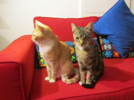 Zwei artige kleine Kater aus dem Waisenhaus  - kurz nach ihrer Ankunft im September 2013