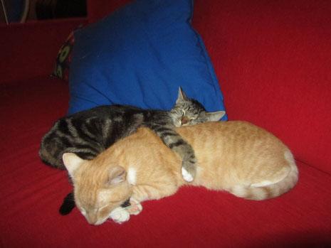 Drei Wochen Schonfrist gönnten sie mir, bevor sie mir und dem Sofa zeigten, was es bedeutet, von Katern besessen zu sein...