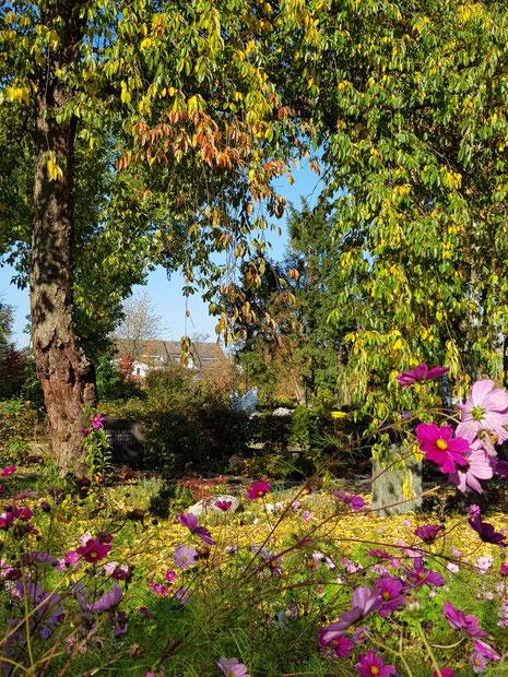 Ein tröstlicher Ort, der kleine Friedhof in Niederhöchstadt