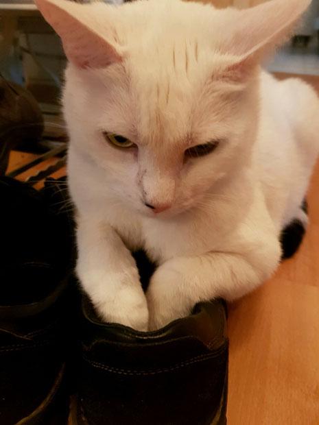 Ronny hat meinen Schuh lieb