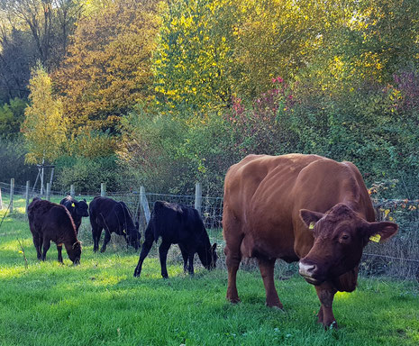 Ich hatte mich schon viel zu lange nicht mit Kühen unterhalten