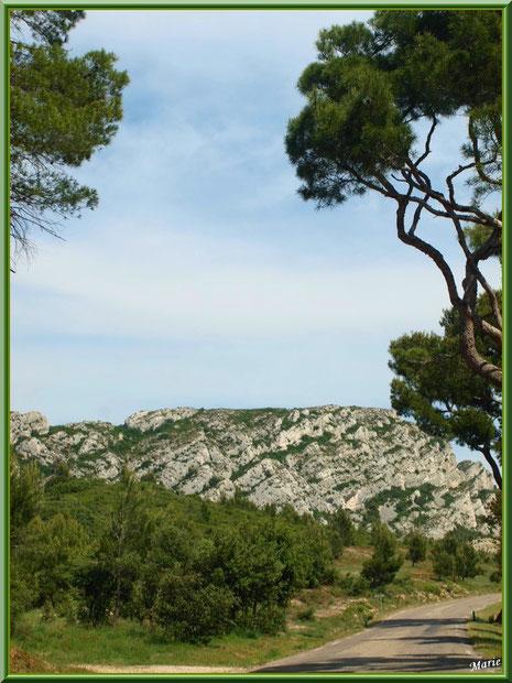 Route dans les Alpilles, Bouches du Rhône