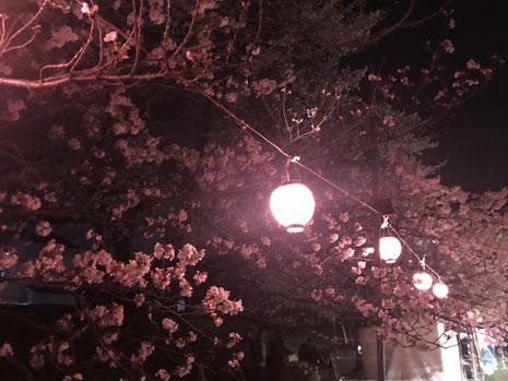 4月 夜桜