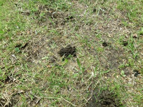 ミミズが土を耕して土壌改良している写真