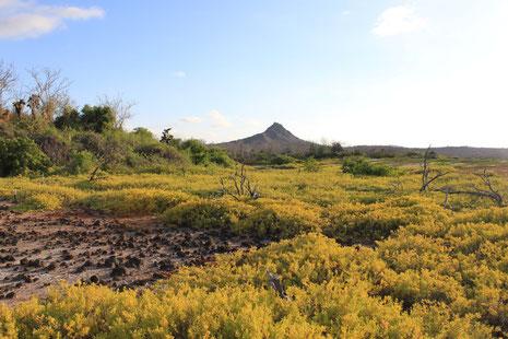 Der Besuch der Galápagos Inseln beinhaltet oft den Aufenthalt auf der Insel Santa Cruz