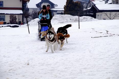 Hannah Eigentler Martin Schlittenhunde Huskys Angerberg Schweden Sveg Sladdog Rennen nordische Hunde Regionalsport Tirol Österreich Weltmeisterschaft Nordic Open RSSC WSO