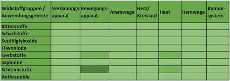 Heilpflanze Beinwell Symphytum degenerative Gelenkerkrankungen Knochenbruch Knochenheilung Pyrrolizidinalkaloide