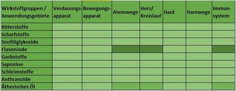 Heilpflanze Holunder Sambucus harntreibend schweißtreibend Flavonoide schleimlösend ätheriesches Öl Fieber Schnupfen Husten Immunsystem Holunderblüten