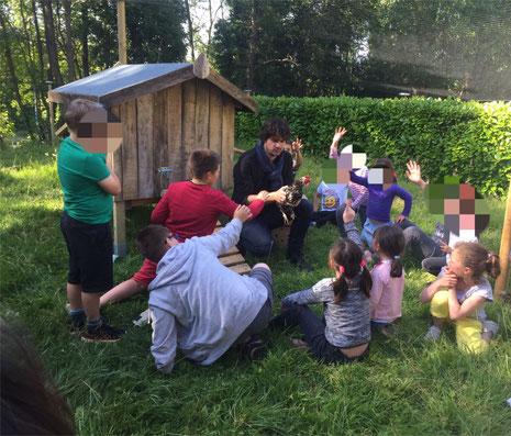 Arrivée des poules dans une maison d'enfants (MECS)