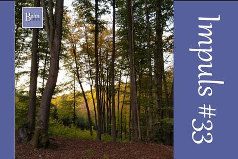 Eine Achtsamkeits-Übung im Wald