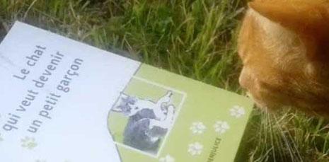 Le chat européen de gouttière Léo qui lit le roman Le chat qui veut devenir un petit garçon