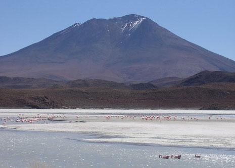 Falmingos auf der Hochebene beim Salzsee von Uyuni.