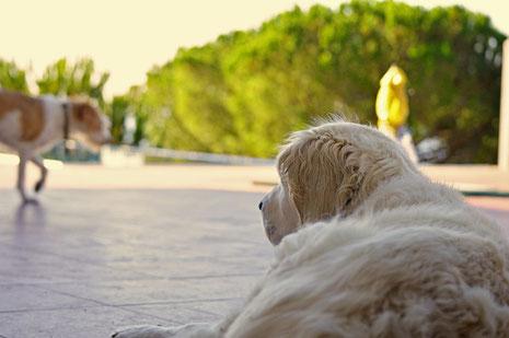 Lola und Apple auf der Terrasse