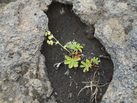 eine Pflanze wächst...