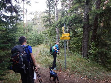 Schneeberg Dogtrekking Dogtrekking Dogtrekking Dogtrekking Elbsandstein-Dogtrekking ESDT Harz-Dogtrekking
