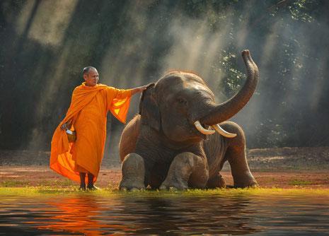 Glaubenssätze, Glück, Glückskompetenz, Elefant