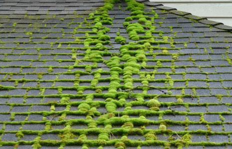 Viel Moos am Dach