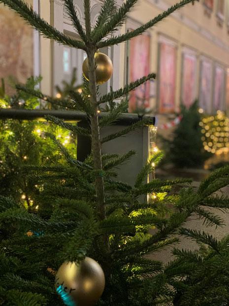 Foto: Am Sonntag werden in Uelzen Weihnachtsbäume für einen guten Zweck versteigert, Copyright: aha.