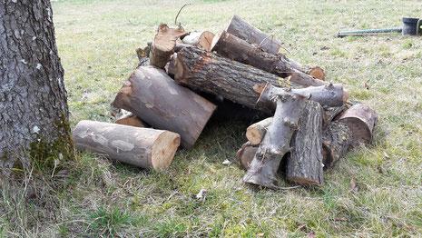 Totholzhaufen auf unserer Streuobstwiese (Foto D. Mohr)