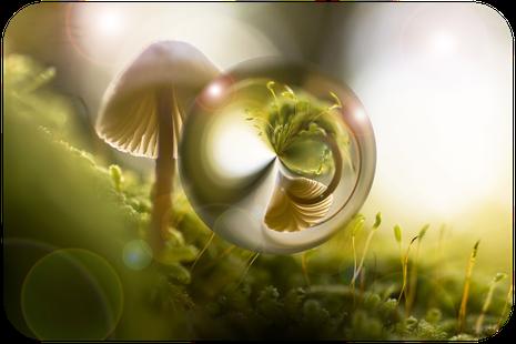 Pilz und Moos, die sich in einem Tautropfen spiegeln