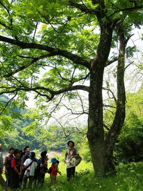 自然の中での過ごし方を体験し、自分なりに自然を楽しむことができるようになります。