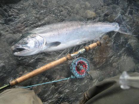 mit Switchrute auf Silberlachs Fliegenfischen