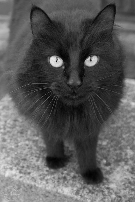 süsse schwarze Katze, Kater, schwarzer Kater, Sigriswil, Thunersee