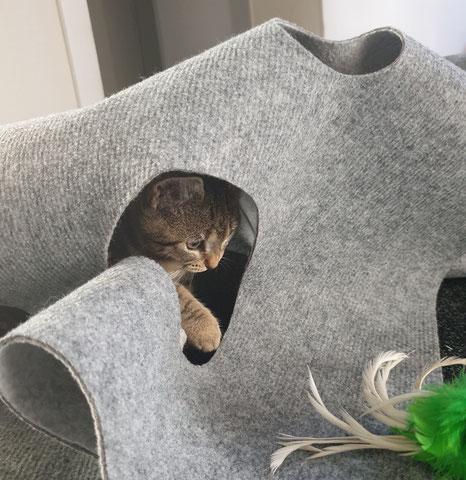 Katzenmädchen Fibi und der CatMountain