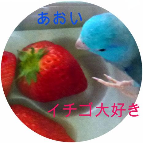 あおい イチゴ大好き