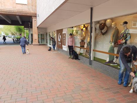 Hundetraining Buxtehude, Junghunde, Stadttraining