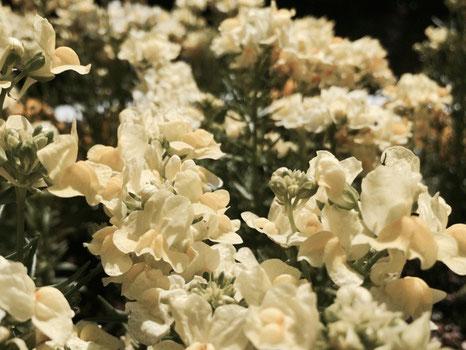 春のお花がきれいに咲いています