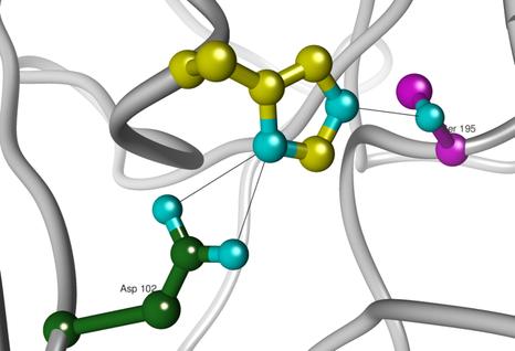 """""""triade catalytique"""" des protéases à sérine (Jaspard, 2011)"""