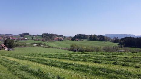 Familienbetrieb, Grünland, Allgäu, Bodensee