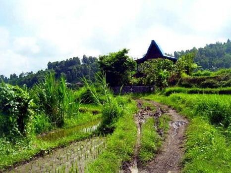 """honeymoon-cottage"" in the ricefields"