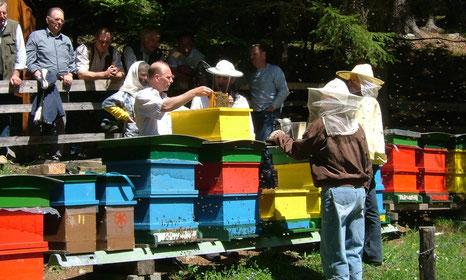 Ein Blick in den Bienenstock