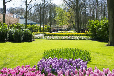 Blick in den Tulpenpark