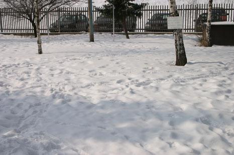 Auch im Winter haben es die Hunde gern im Freien zu sein