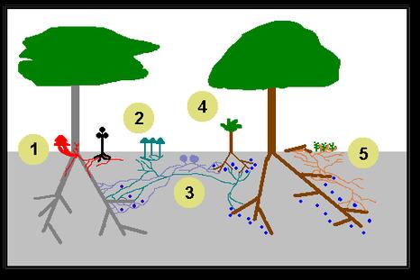esempio-di-wood-wide-web