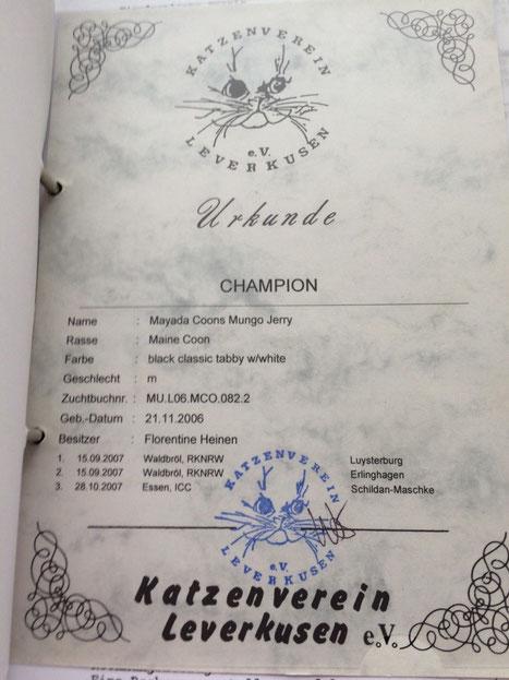 Champion Urkunde
