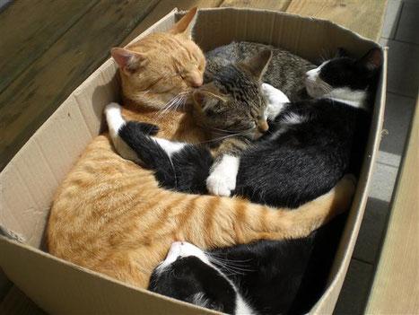 durch nichts zu stören - Mohr, Garfield, Lucy und Co.