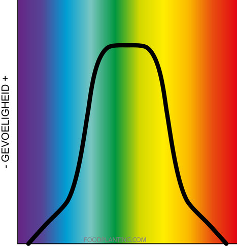 menselijk oog, visueel spectrum