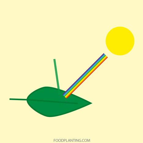 licht weerkaatsing van blad