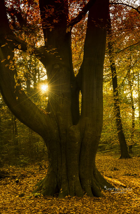 zon als ster, Den Treek, Leusden