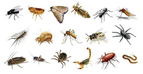 Cuantos insectos hay en el mundo? - Urban Pestis, SL