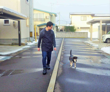 犬の散歩風景写真
