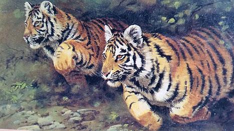Trauma-Heilung. Das Erwachen des Tigers. Peter A. Levine